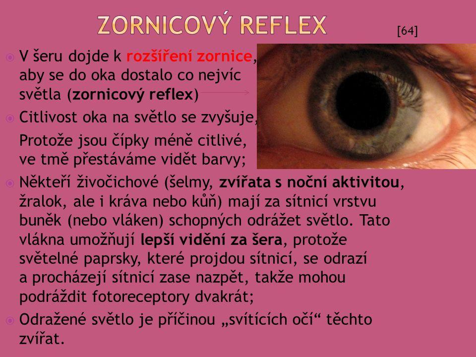 Zornicový reflex [64]